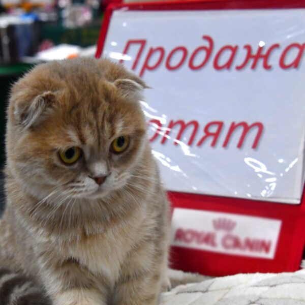 Выставка-продажа котят «Баст»