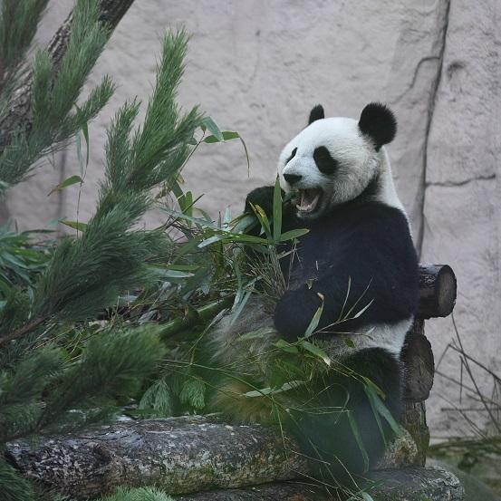 23 февраля в зоопарке