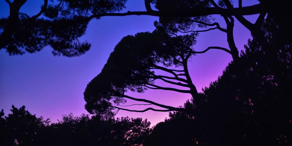 силуэт деревьев на закате